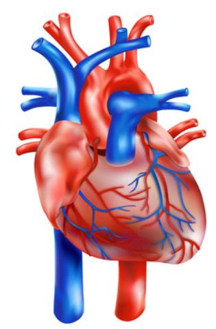 Schmerzensgeld aufgrund von Behandlungsfehler: Beeinträchtigung von Herzklappen